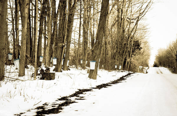 Photograph - The Sap Road by Nick Mares