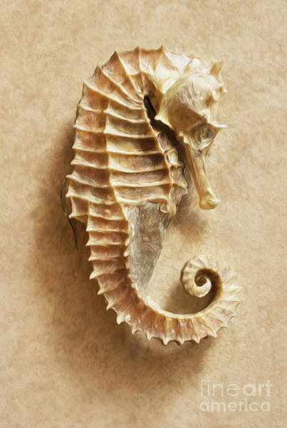 Wall Art - Photograph - The Sea Horse by Jon Neidert