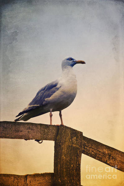 Photograph - The Seagull by Angela Doelling AD DESIGN Photo and PhotoArt