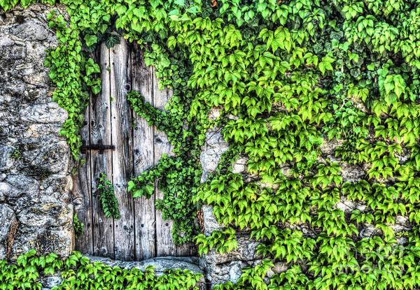 Climbing Vine Photograph - The Secret Garden by DiFigiano Photography