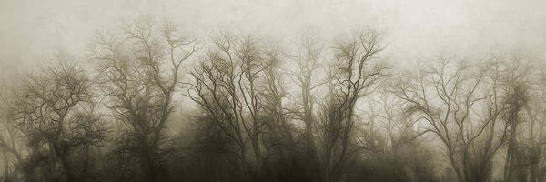 Foggy Wall Art - Photograph - The Secrets Of The Trees by Scott Norris