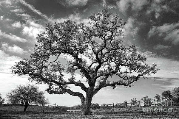 Photograph - The Sentinel Bw by Jemmy Archer
