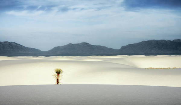 Yucca Elata Wall Art - Photograph - The Sentinel by James Barber