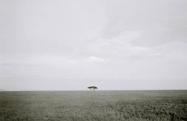 Photograph - The Serengeti by Shaun Higson