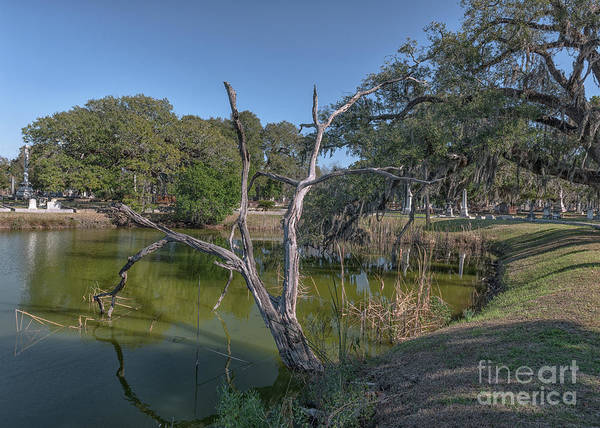 Photograph - The Serenity Of Tree's by Dale Powell
