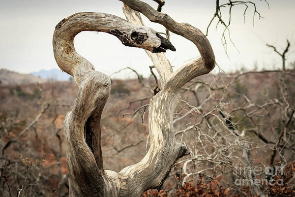 Photograph - The Serpent Ree #2 by Richard Smith