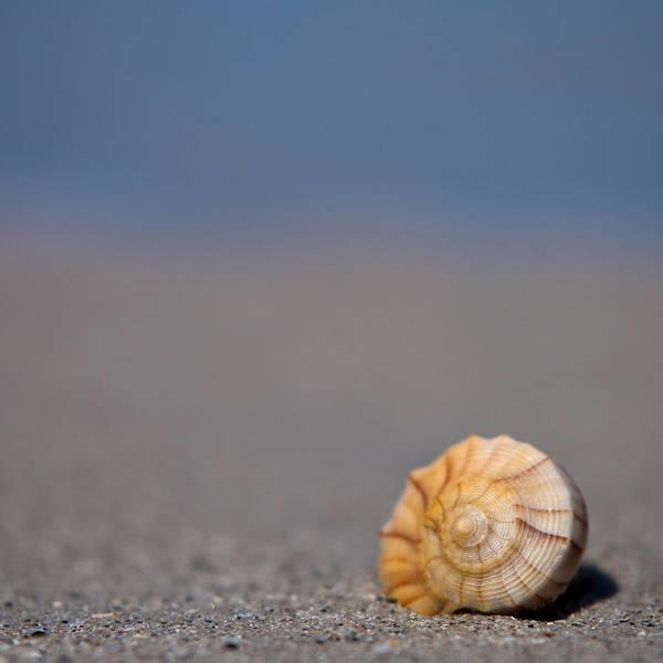 Photograph - The Shell by Ryan Heffron