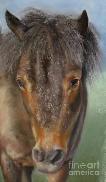 Wall Art - Painting - The Shetland Pony by Sabina Haas