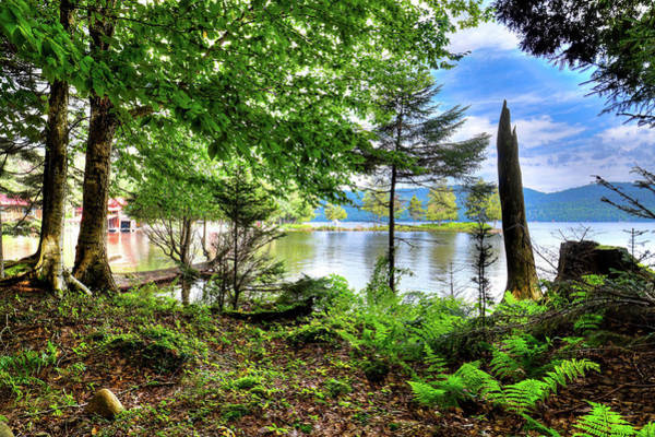 Photograph - The Shore At Covewood by David Patterson