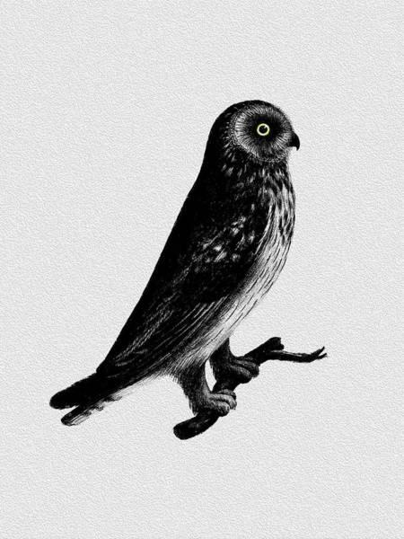 Shorts Photograph - The Short Eared Owl by Mark Rogan