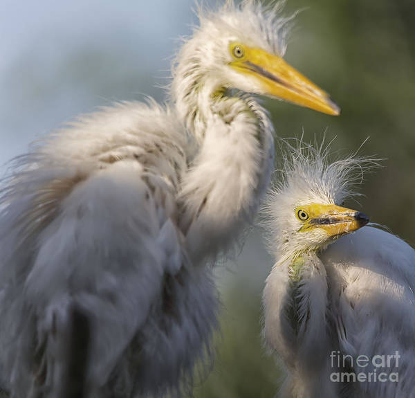 Photograph - The Siblings by Mary Lou Chmura