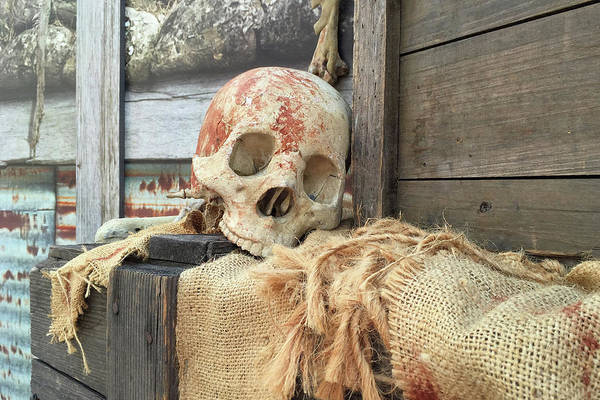 Life Or Death Photograph - The Skull Bone by Art Block Collections