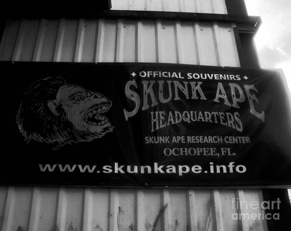 Skunk Photograph - The Skunk Ape by David Lee Thompson