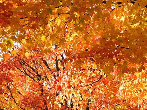 Photograph - The Sky Of Fall by Robert Knight