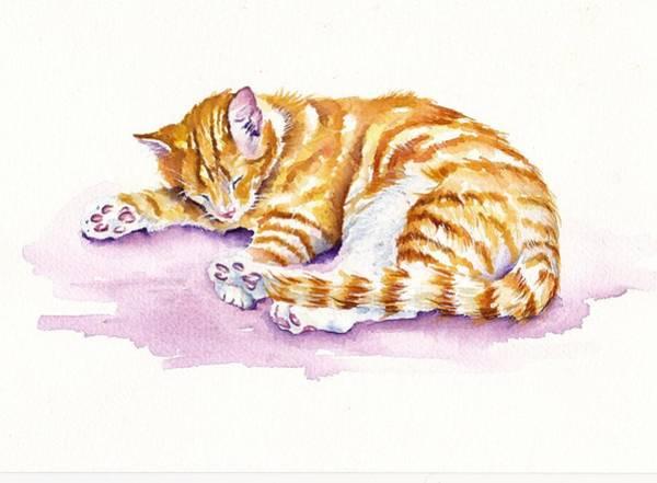 Cats Wall Art - Painting - The Sleepy Kitten by Debra Hall