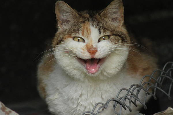 Wall Art - Photograph - The Smiling Cat by Valia Bradshaw