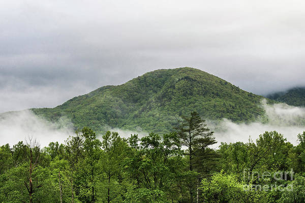 Photograph - The Smokies by Andrea Silies