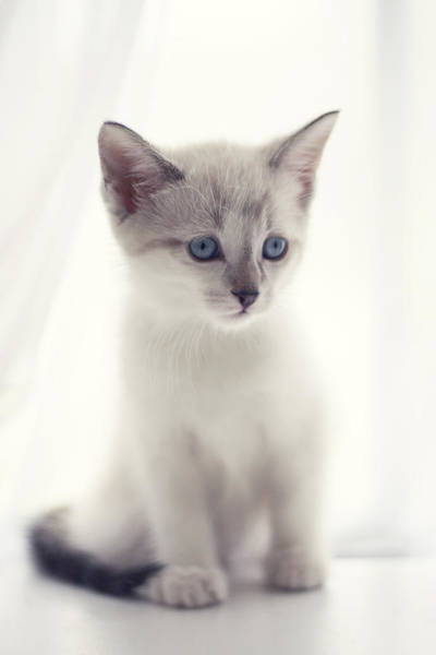 Cute Kitten Photograph - The Snow Prince by Amy Tyler