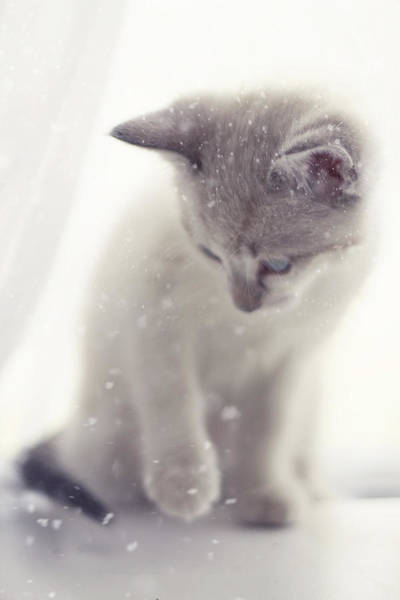 Wall Art - Photograph - The Snow Prince II by Amy Tyler