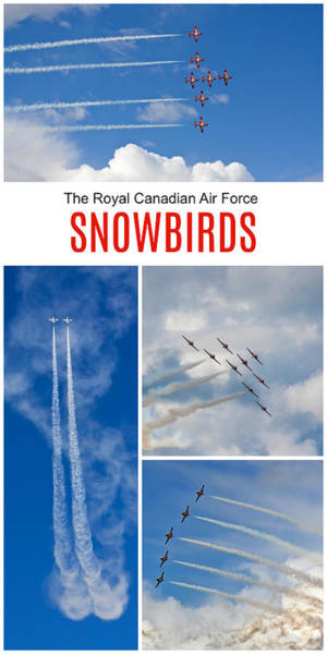 Photograph - The Snowbirds Collage by Tatiana Travelways