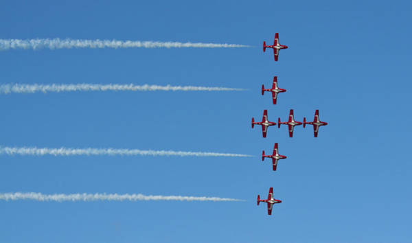 Photograph - The Snowbirds  by Tatiana Travelways