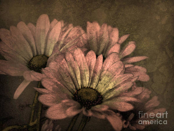 Photograph - The Soft Glow Of Spring by Tara Turner