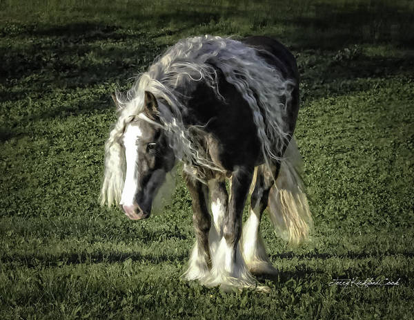 Photograph - The Softest Mare by Terry Kirkland Cook