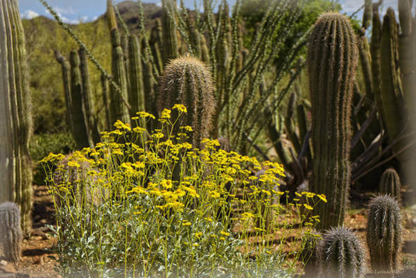 Photograph - The Song Of The Sonoran Desert by Lucinda Walter