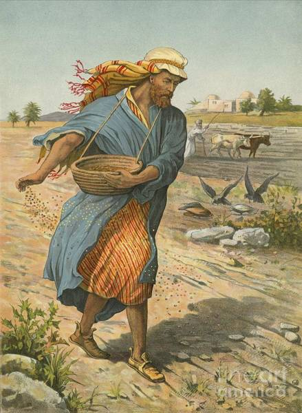 Plowing Painting - The Sower Sowing The Seed by English School
