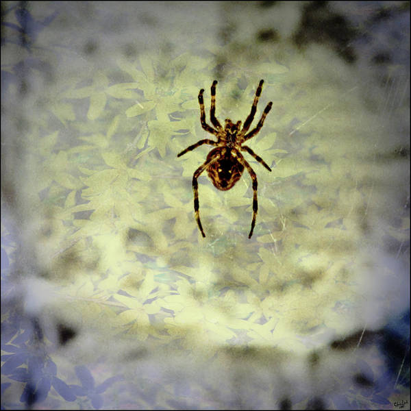 Photograph - The Spider Waits by Chris Lord