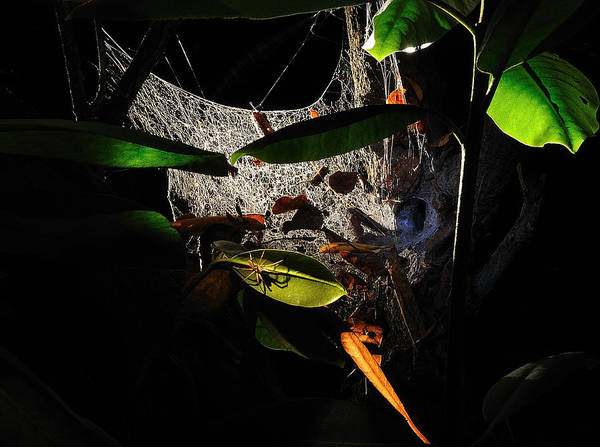 Photograph - The Spider's Domain 2 by Mark Fuller