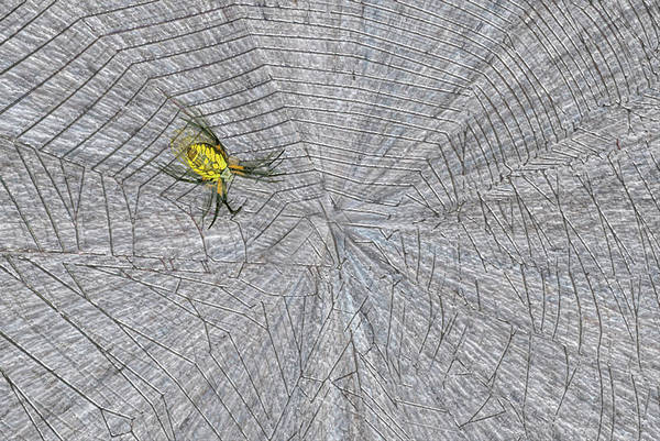 Wall Art - Painting - The Spiders Web by Jack Zulli