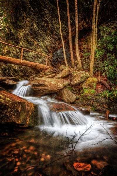Photograph - The Spirit Of The Forest by Debra and Dave Vanderlaan