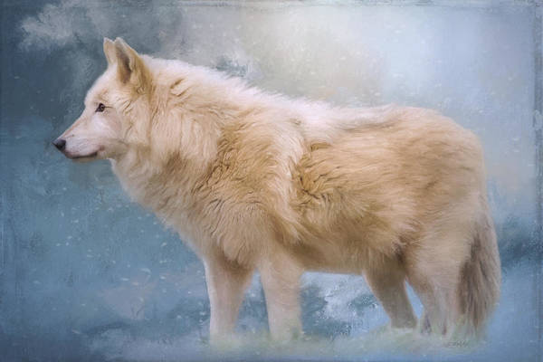 Painting - The Spirit Within - Arctic Wolf Art by Jordan Blackstone