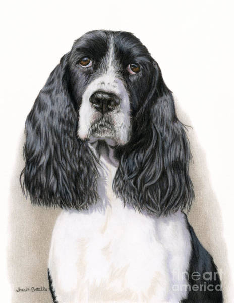 Sad Painting - The Springer Spaniel by Sarah Batalka
