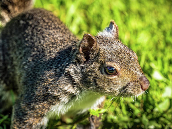 Photograph - The Squirrel Selfie by Robin Zygelman