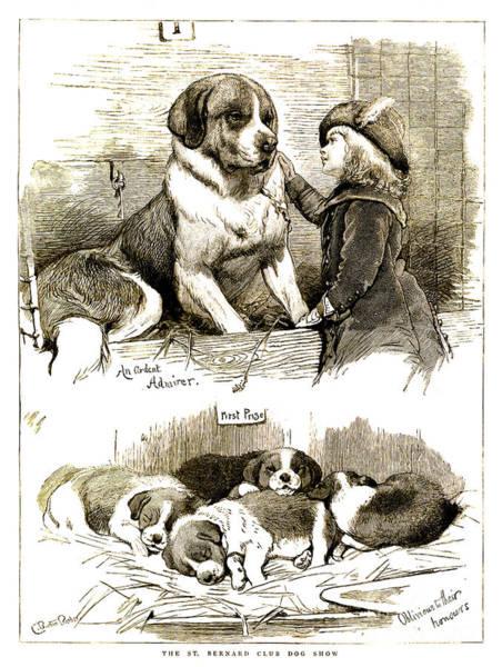 Pup Drawing - The St Bernard Club Dog Show by Charles Burton Barber