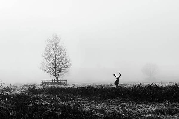 Photograph - The Stag by Nick Bywater