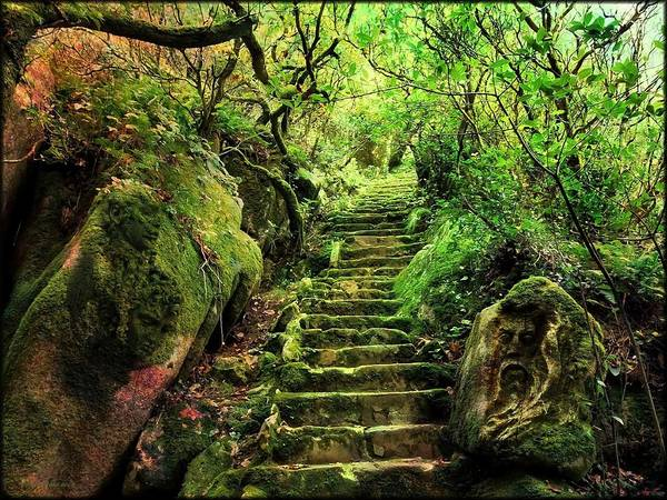 Wall Art - Photograph - The Stairs Of The Forest  by Daniel Arrhakis