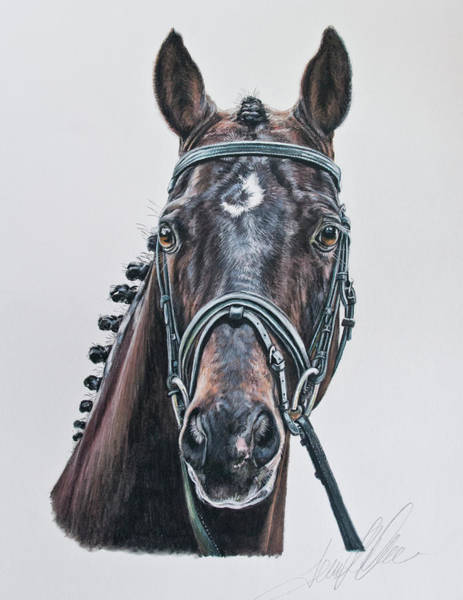 Pastel - The Stallion Don Principe  by Terry Kirkland Cook