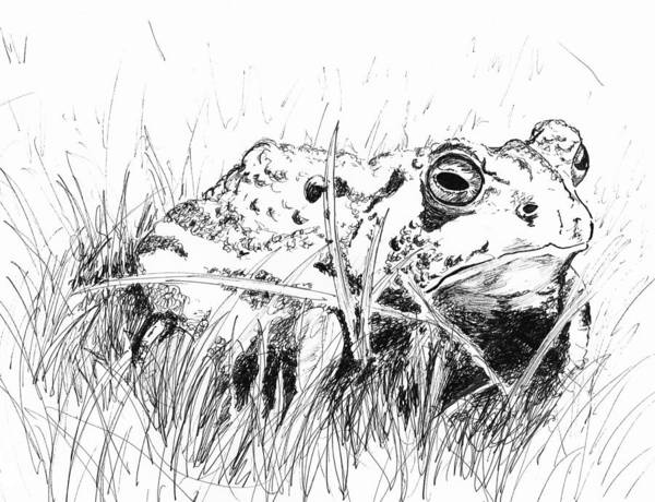 Drawing - The Stalwart Old Toad by Andrew Gillette