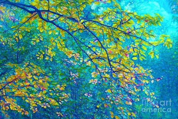 Aqua Green Photograph - The Star Of The Forest - 773 by Variance Collections