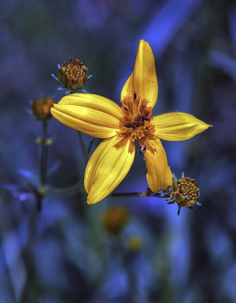 Photograph - The Stars Have It by Elaine Malott
