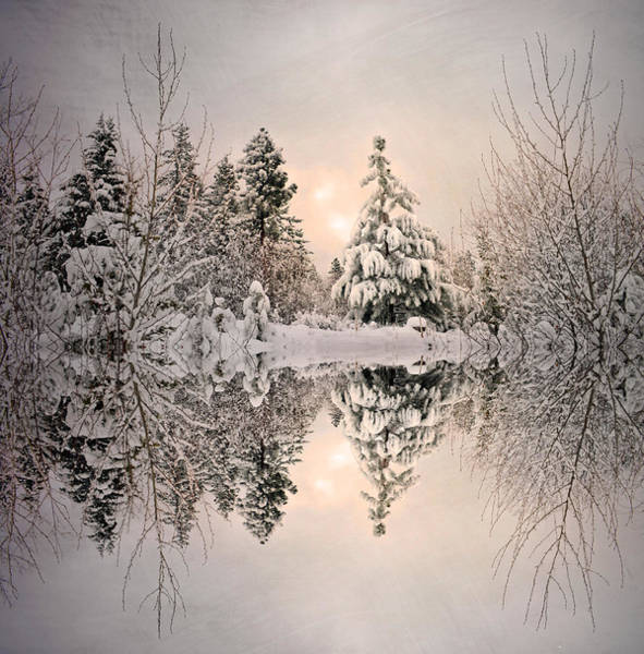 Photograph - The Still Trees Of Winter by Tara Turner