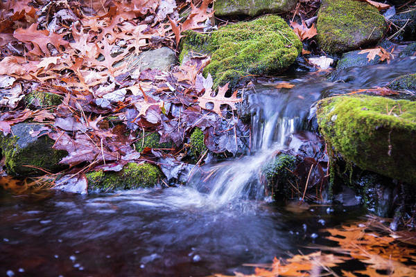 Photograph - The Stream In Fall by Robert McKay Jones