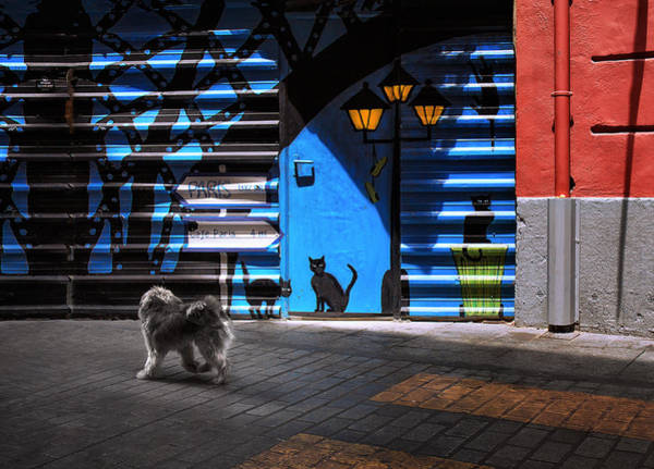 Wall Art - Photograph - The Street Cats. by Juan Luis Duran