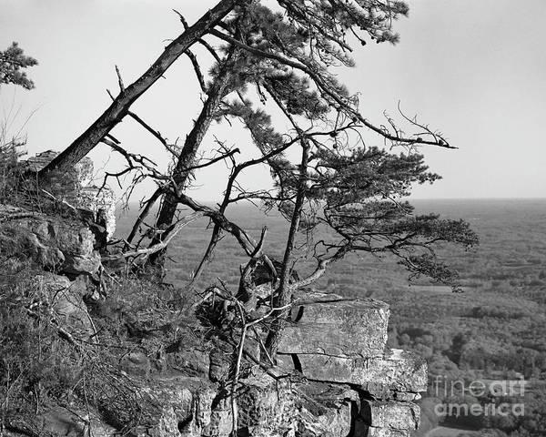 Photograph - The Struggle by Patrick M Lynch