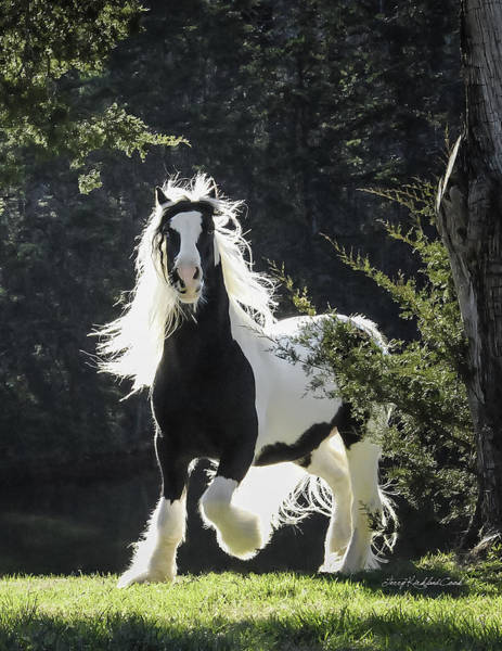 Photograph - The Stunning Horse by Terry Kirkland Cook