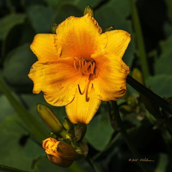 Photograph - The Summer Blooms by Edward Peterson