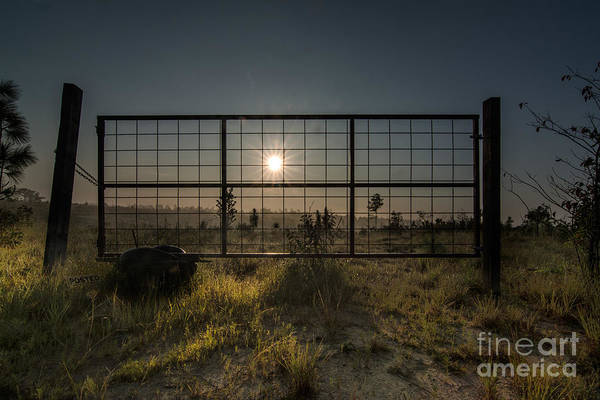 Photograph - The Sun Is Free by James Hennis